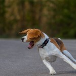 The BEAGLE Theory of Life