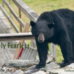 Bear-ly fearless